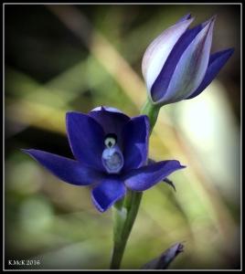wildflower_5