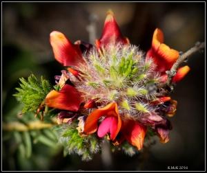 wildflower_50
