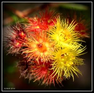 wildflower_51