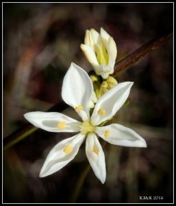wildflower_54