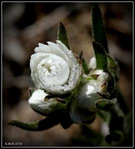 wildflower_55
