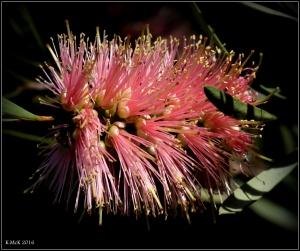 wildflower_56