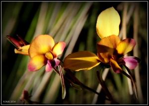 wildflower_57