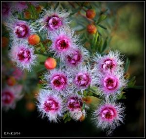 wildflower_58