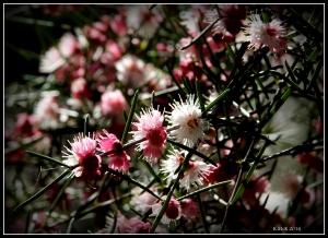 wildflower_59