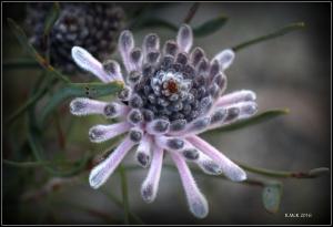wildflower_6