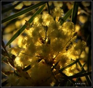 wildflower_60