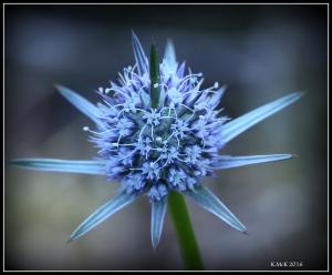 wildflower_7
