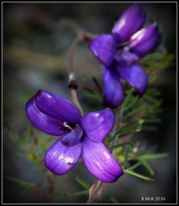 wildflower_9